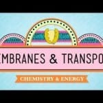 Membranes And Chemistry